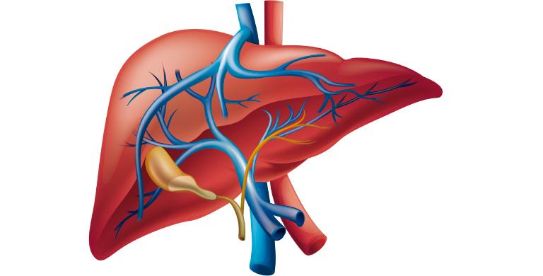 Como cuidar el hígado: el órgano que afecta todos los sitemas del ...